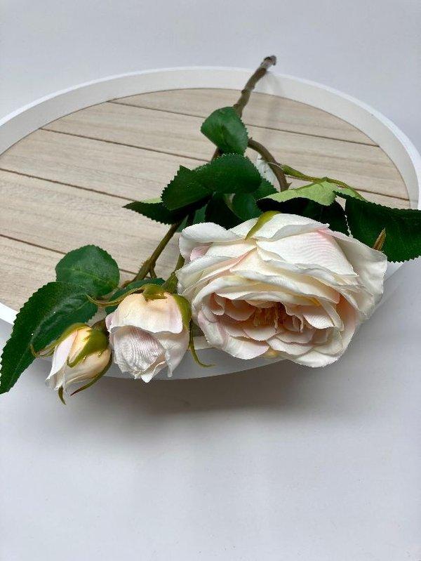 Englische Rose: 1 große Blüte 1 aufgehende und eine geschlossene Knospe Kunstfloristik von DPI